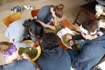 sorting green grams at SoH, 2012